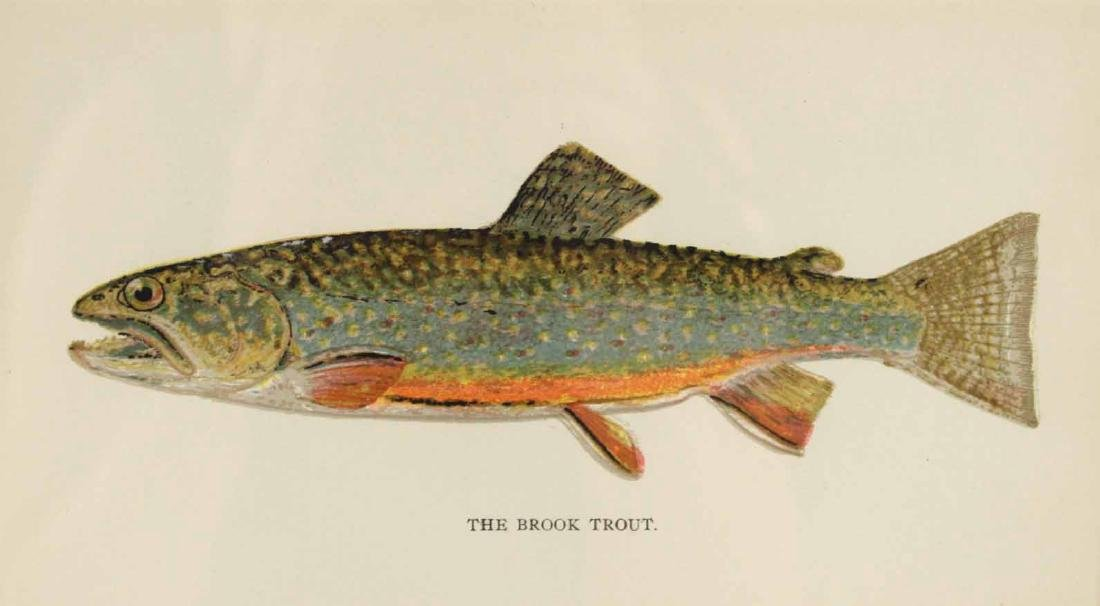 Two French Colored Fish Engravings - 5
