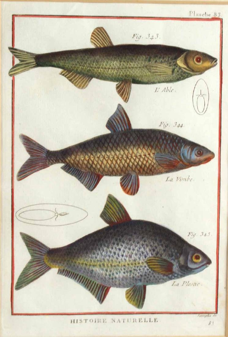 Two French Colored Fish Engravings - 6