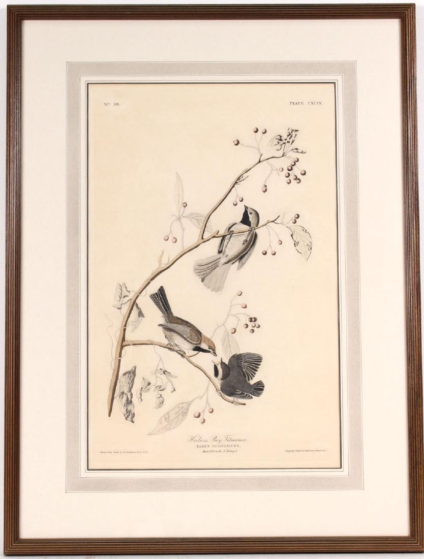Audubon Bird Print Engraving Havell