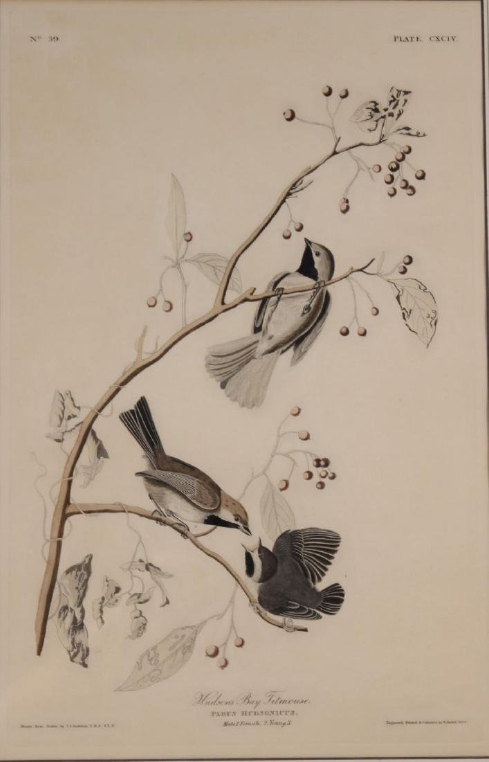 Audubon Bird Print Engraving Havell - 2