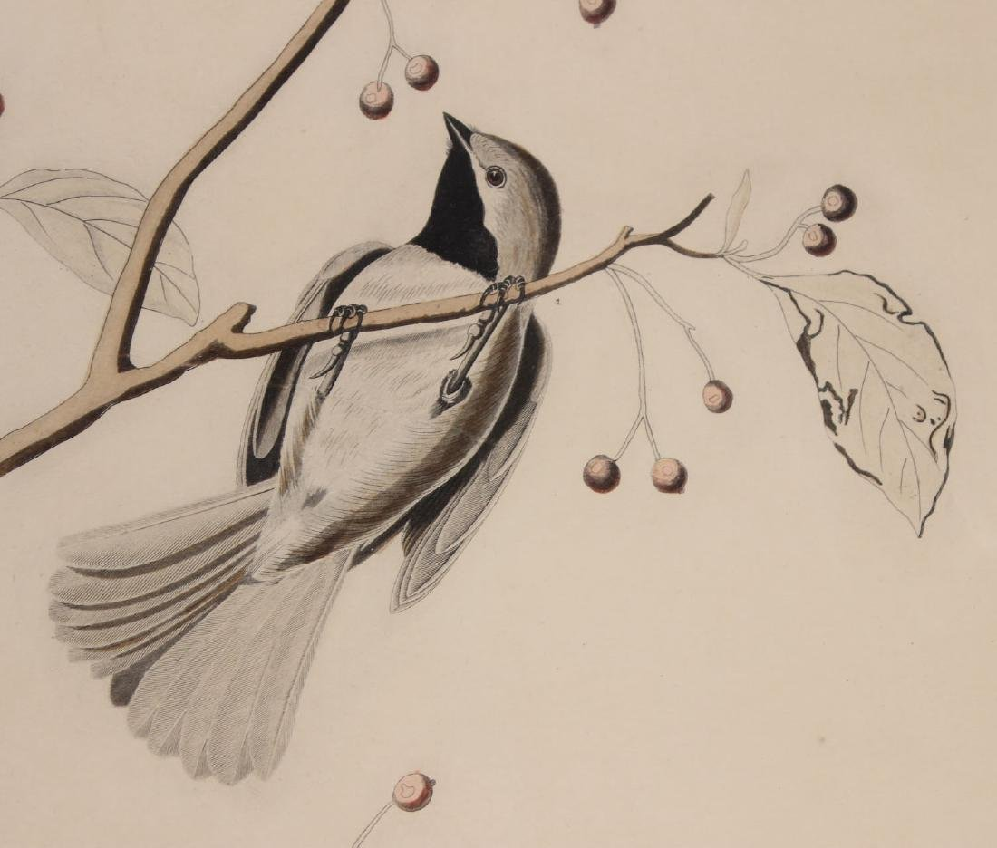 Audubon Bird Print Engraving Havell - 3