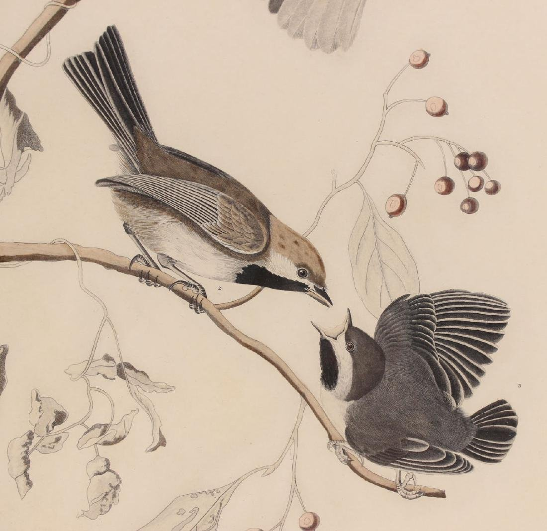 Audubon Bird Print Engraving Havell - 4