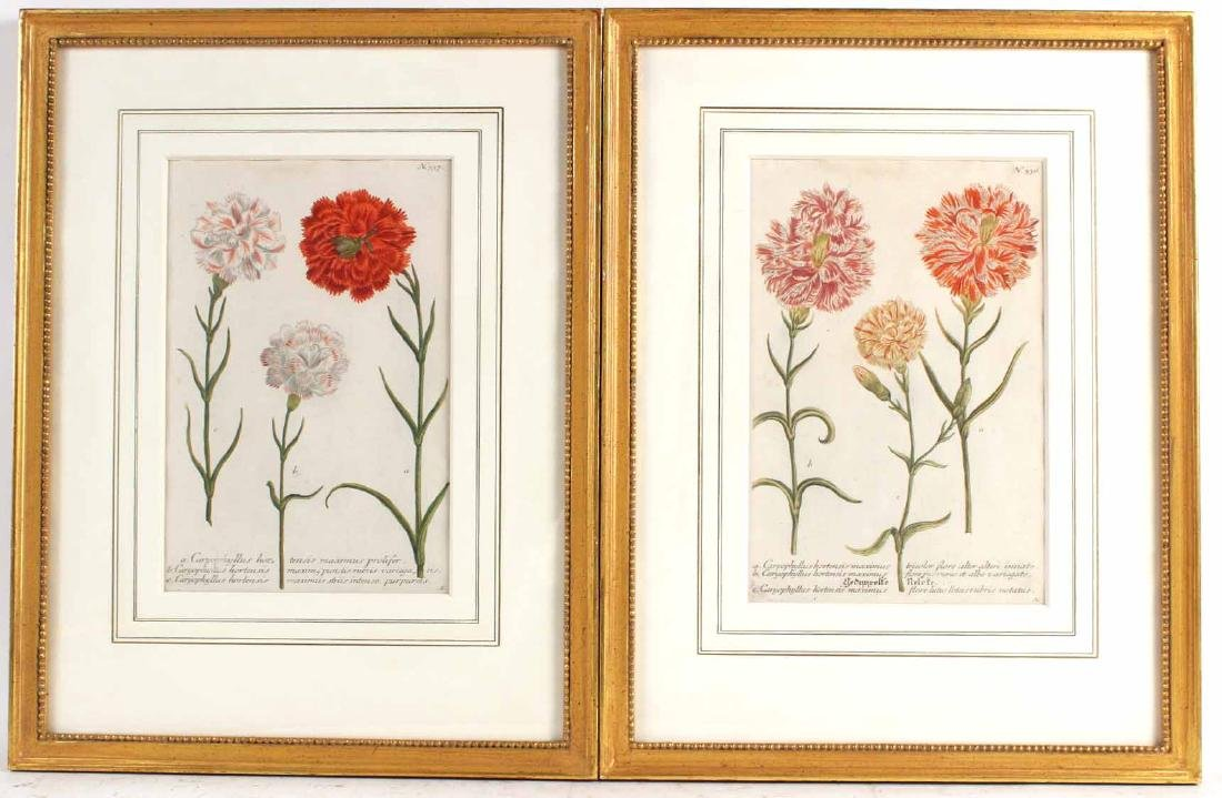 Two Hand Colored Botanical Prints