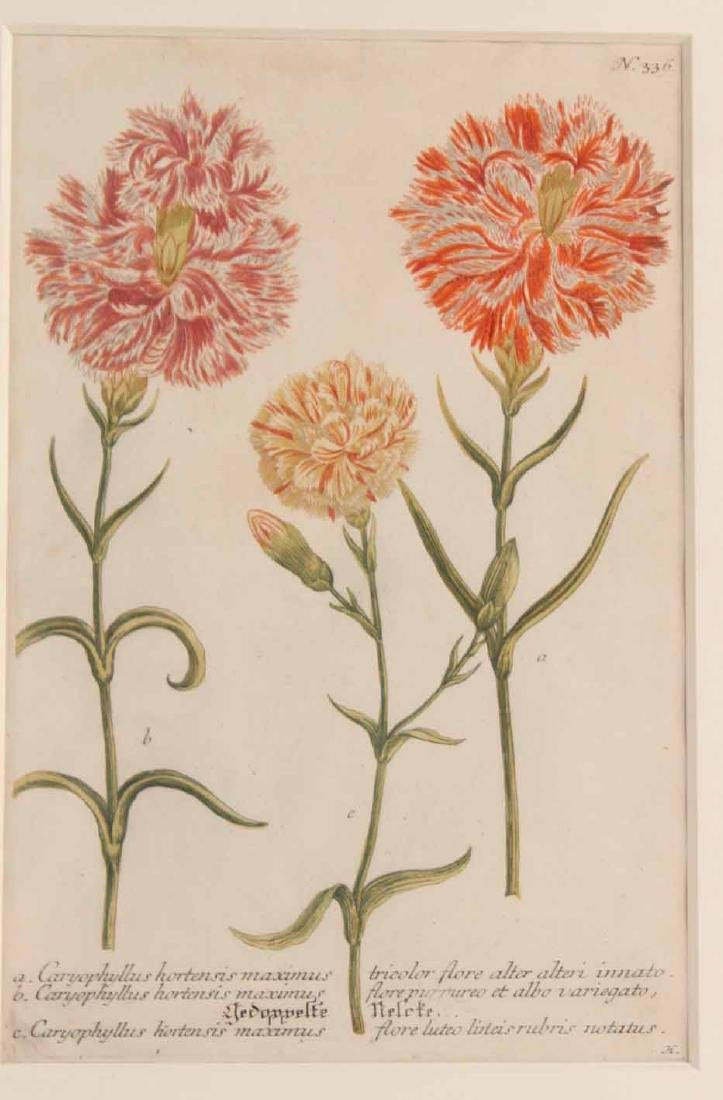 Two Hand Colored Botanical Prints - 2