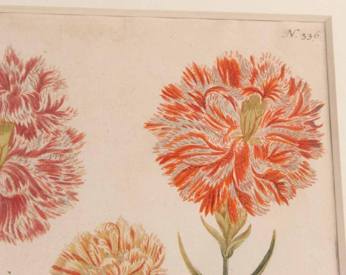 Two Hand Colored Botanical Prints - 4