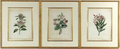 Three Botanical Hand Colored Prints