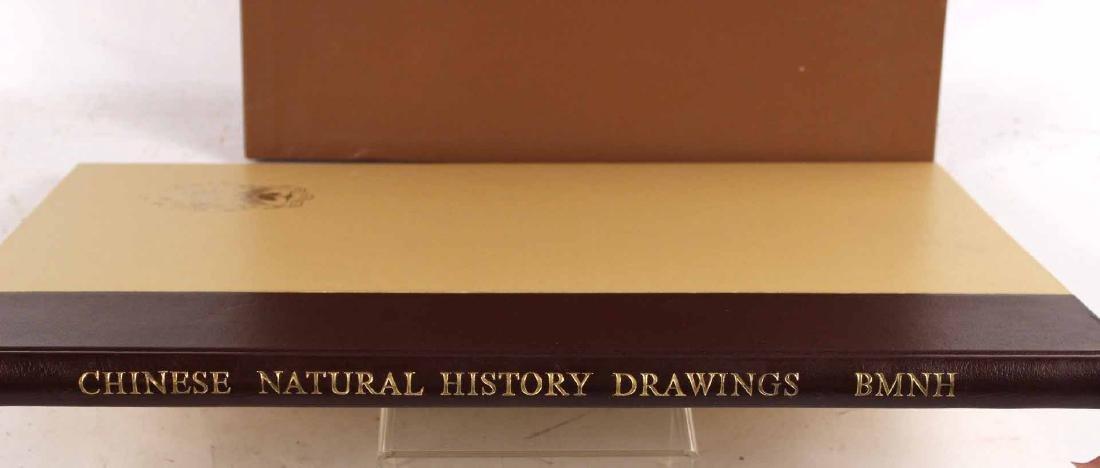 Chinese Natural History Drawings - 3