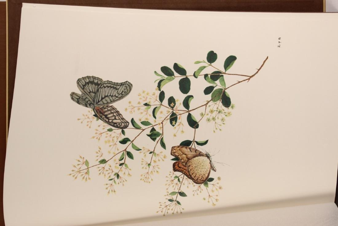Chinese Natural History Drawings - 6