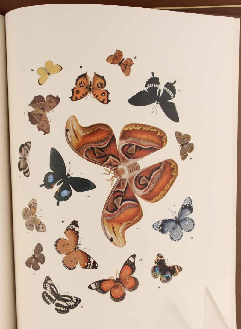 Chinese Natural History Drawings - 7
