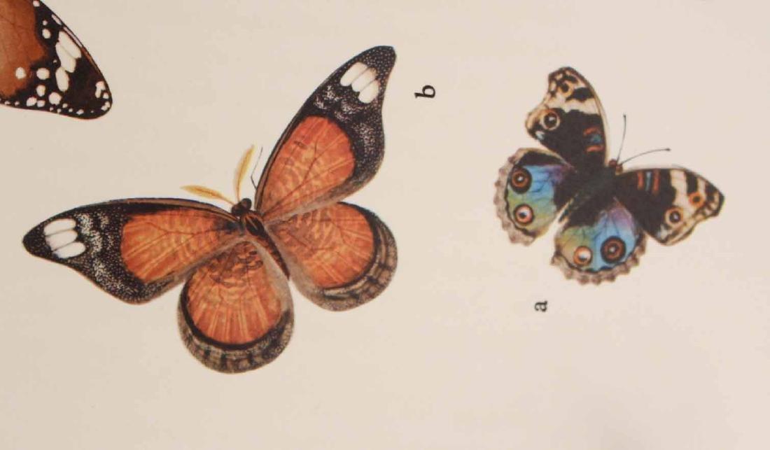 Chinese Natural History Drawings - 8
