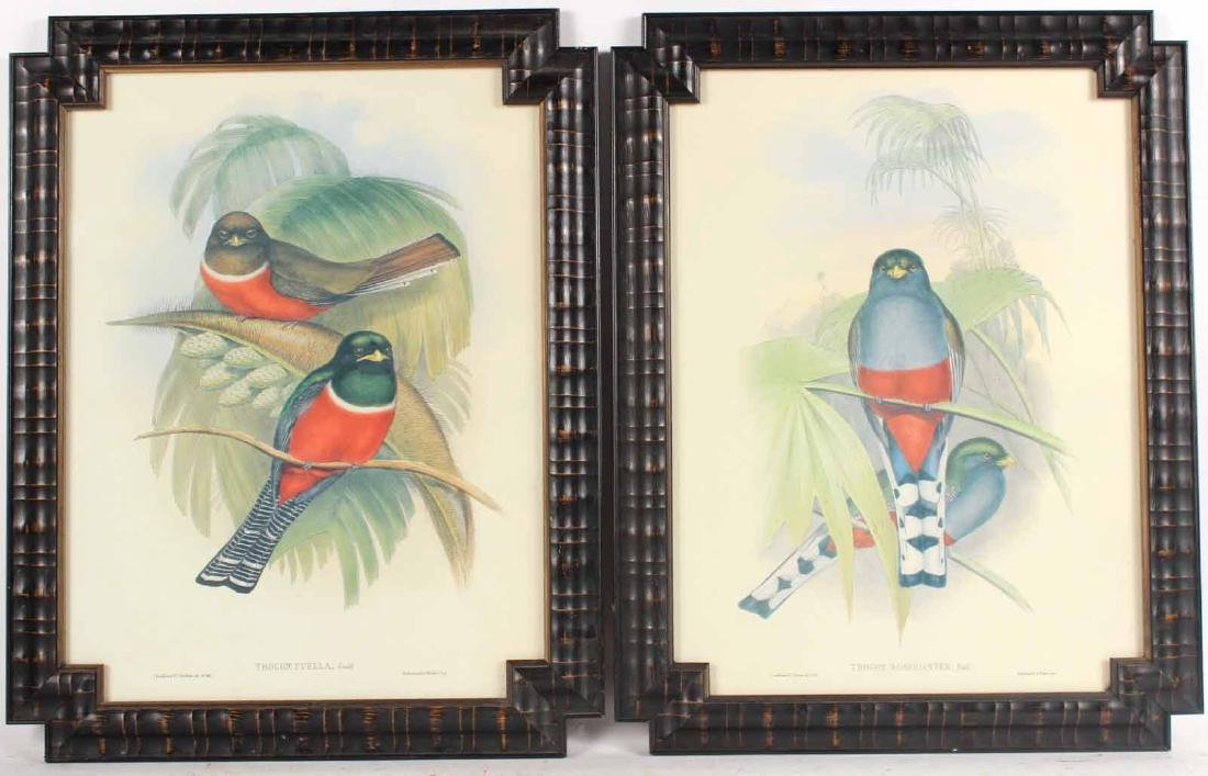 Two Ornithological Prints, J. Gould