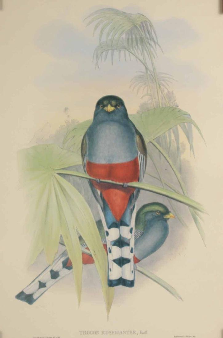 Two Ornithological Prints, J. Gould - 3