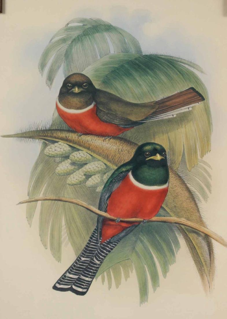Two Ornithological Prints, J. Gould - 6