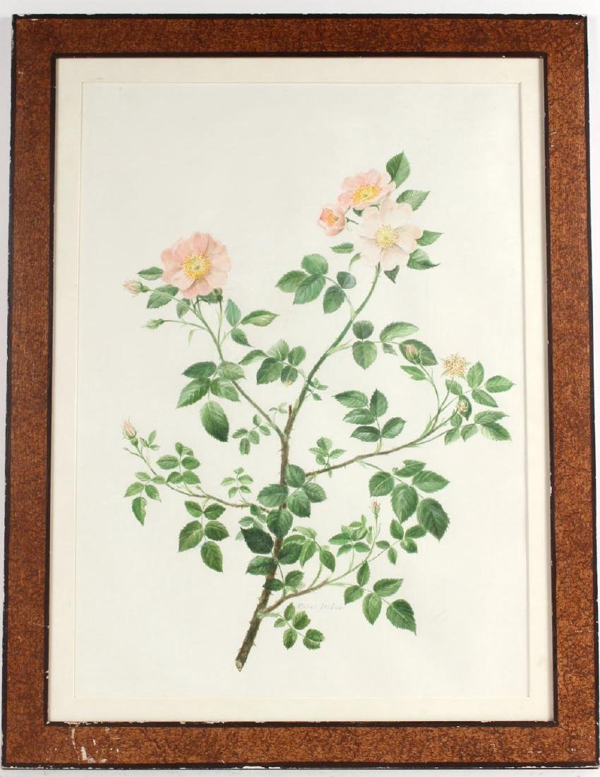 Watercolor of a Rose Tree Branch, Robert Jackson
