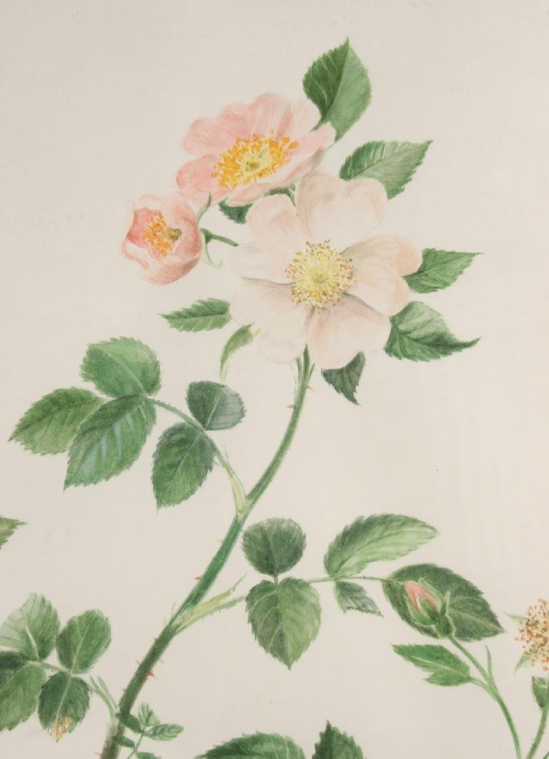 Watercolor of a Rose Tree Branch, Robert Jackson - 2