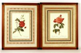 Two Color Botanical Prints Pierre Joseph Redoute