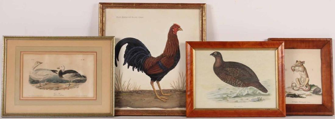 "Lithograph, ""Snow Goose"" J.J. Audubon"