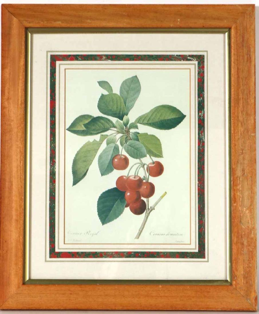 Three Prints of Fruit - 10