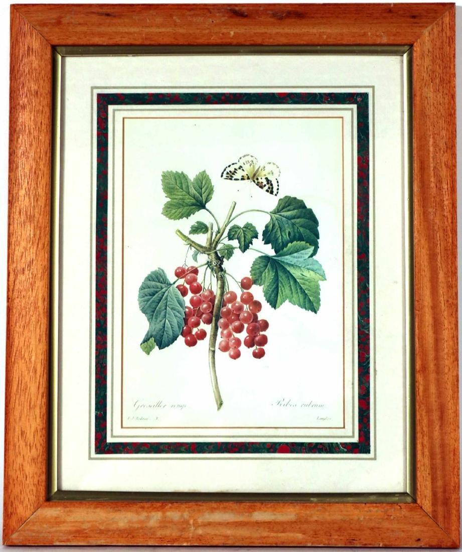 Three Prints of Fruit - 6