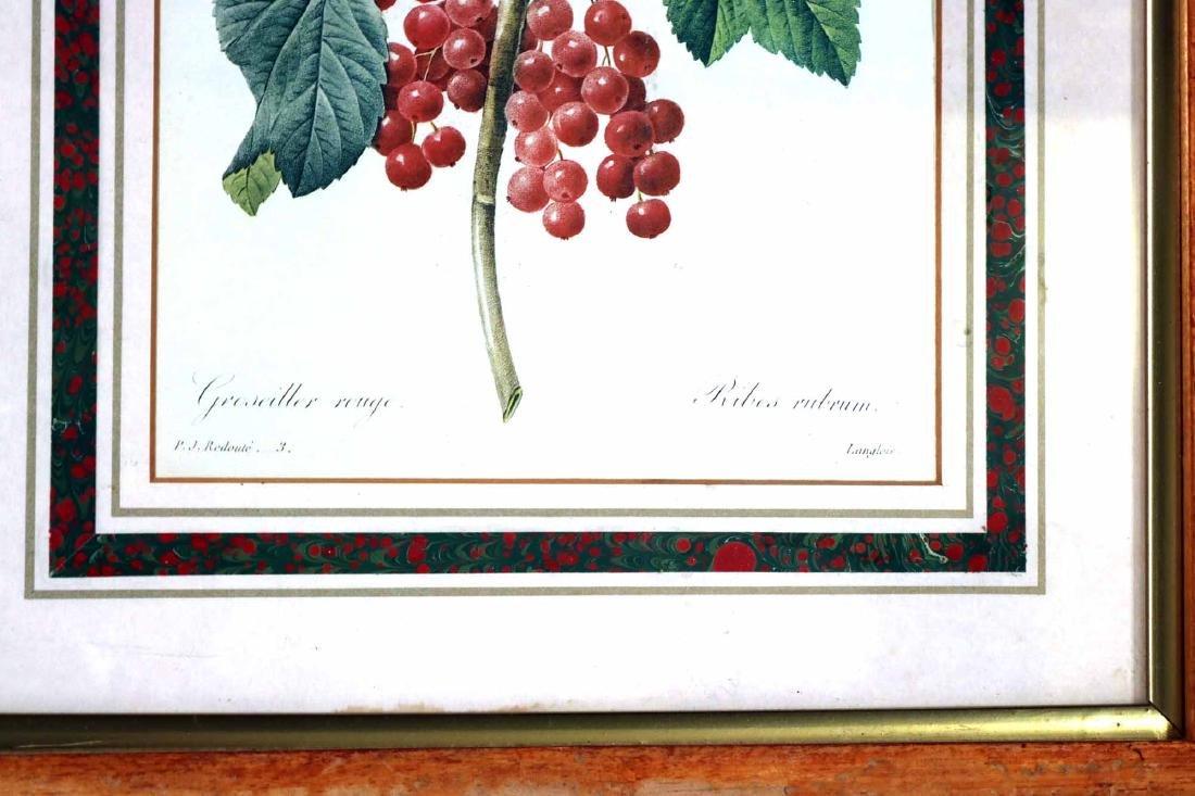 Three Prints of Fruit - 7