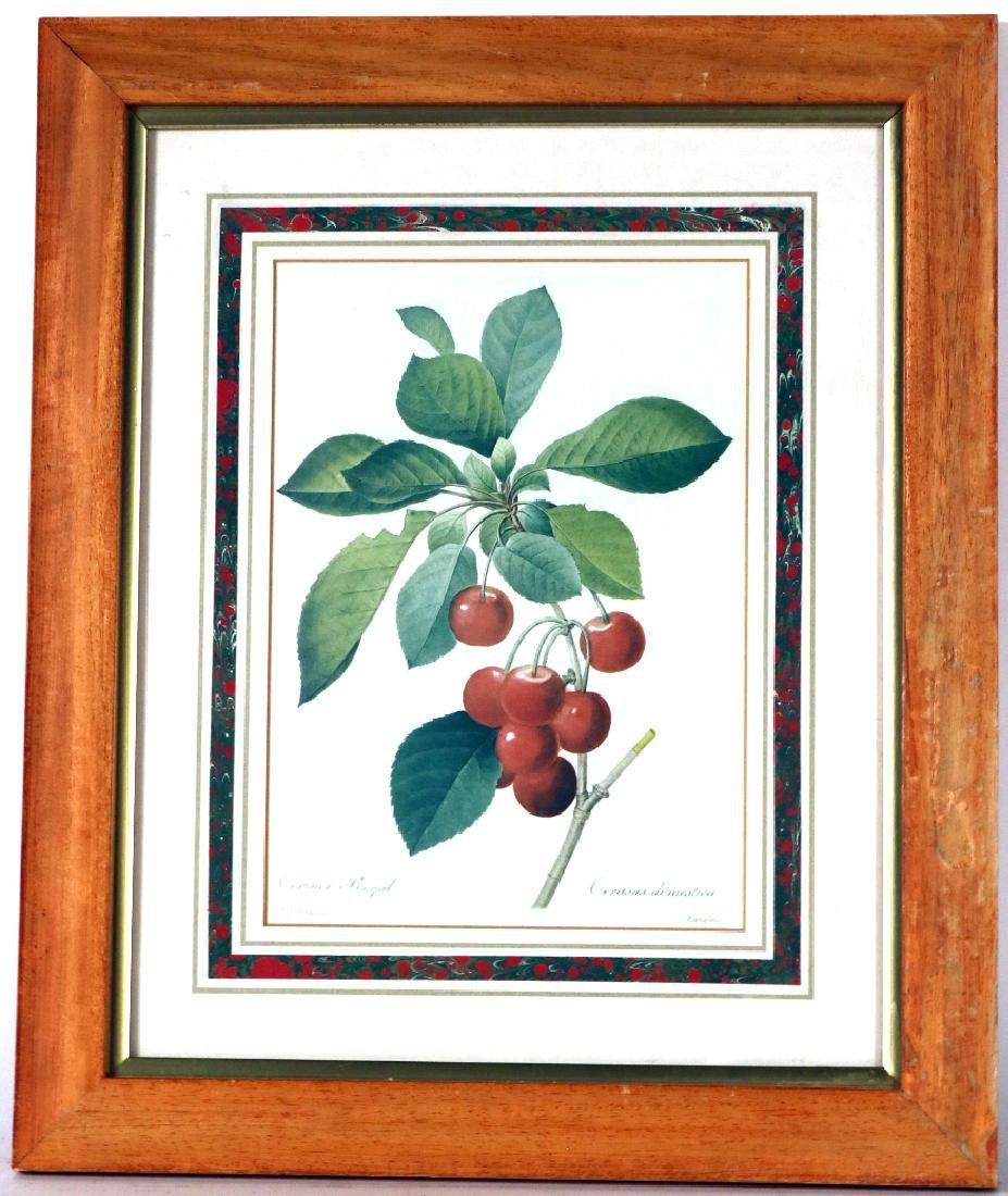 Three Prints of Fruit - 9