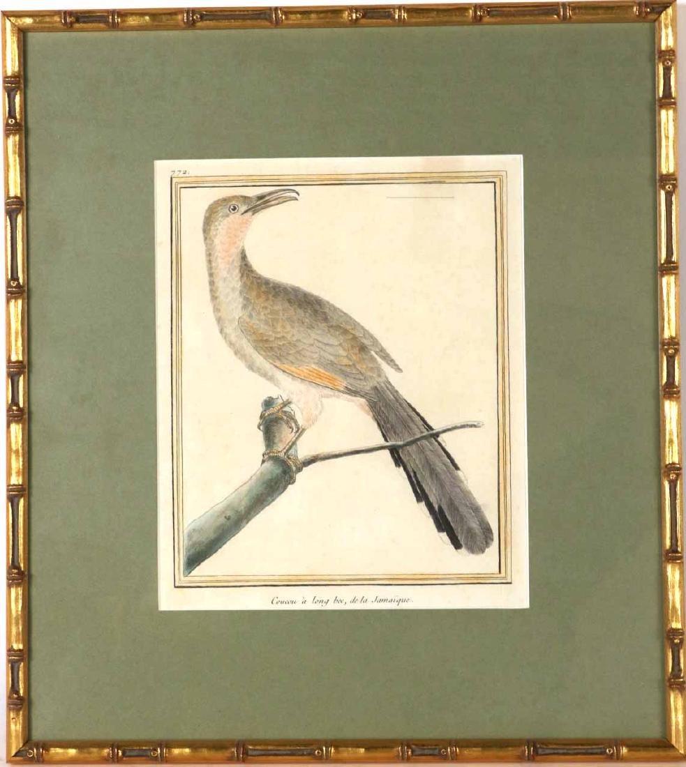 Six 18th C. Ornithological Prints - 10