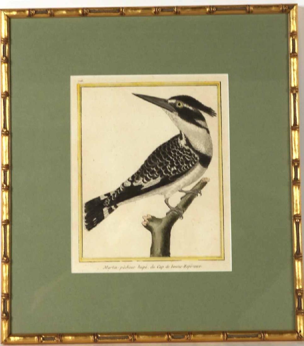 Six 18th C. Ornithological Prints - 11