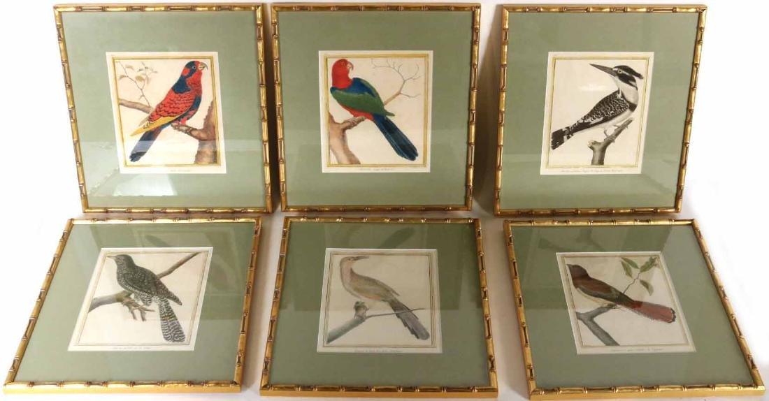 Six 18th C. Ornithological Prints