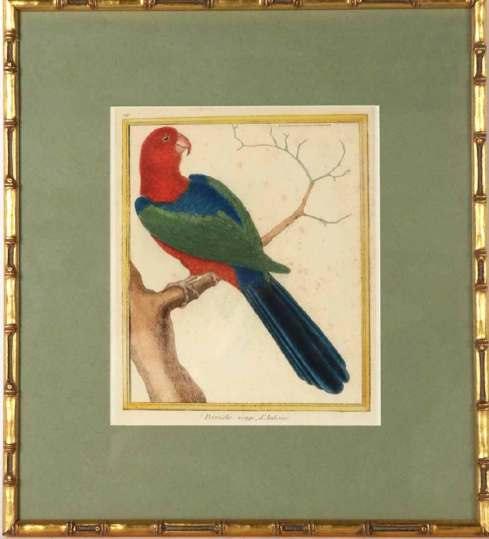 Six 18th C. Ornithological Prints - 2