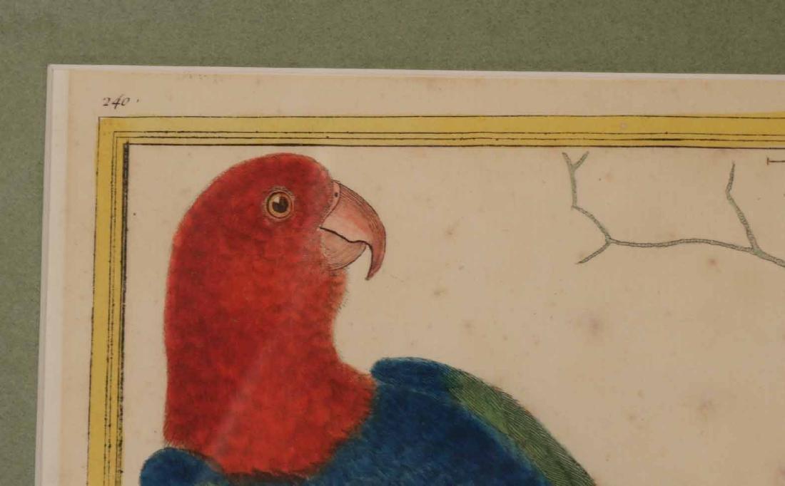 Six 18th C. Ornithological Prints - 4