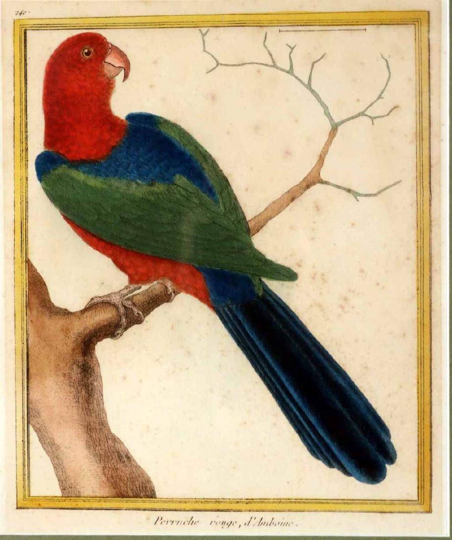 Six 18th C. Ornithological Prints - 5
