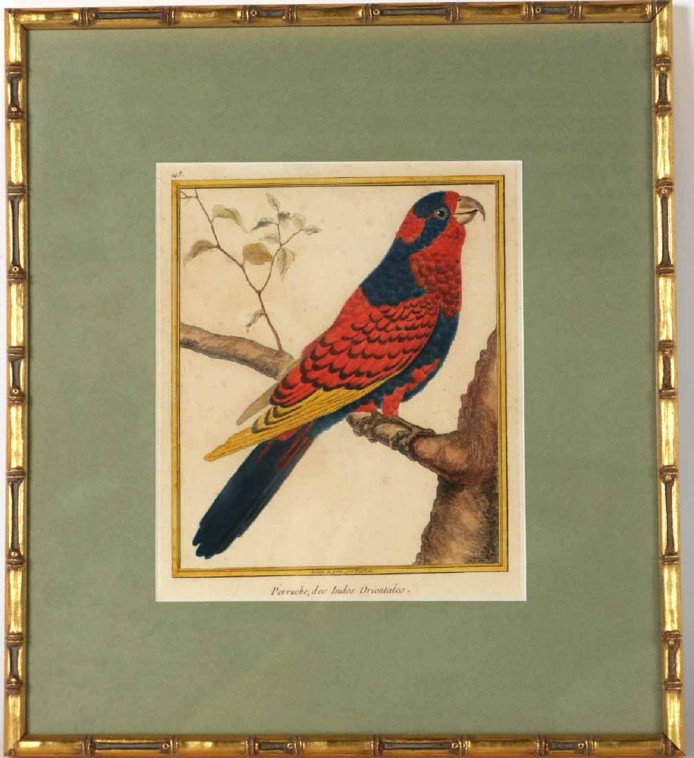 Six 18th C. Ornithological Prints - 6