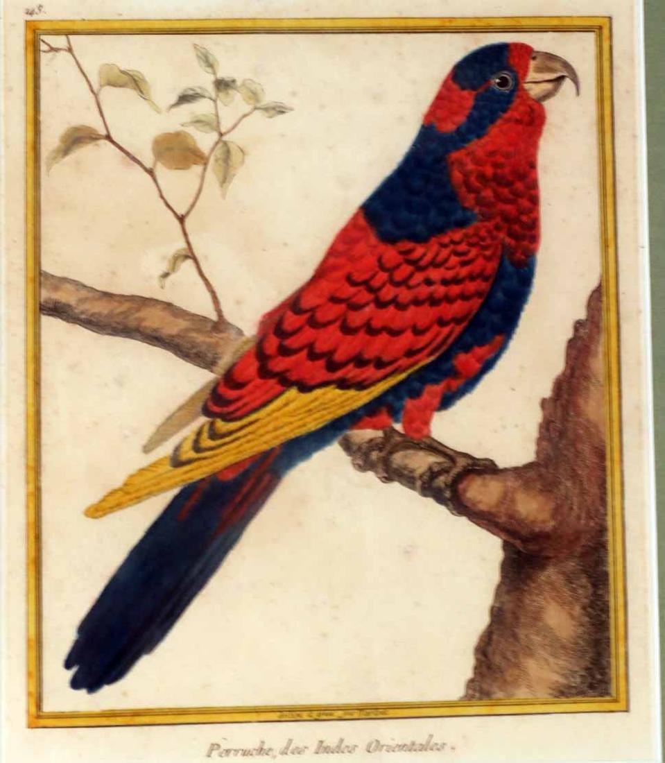 Six 18th C. Ornithological Prints - 7