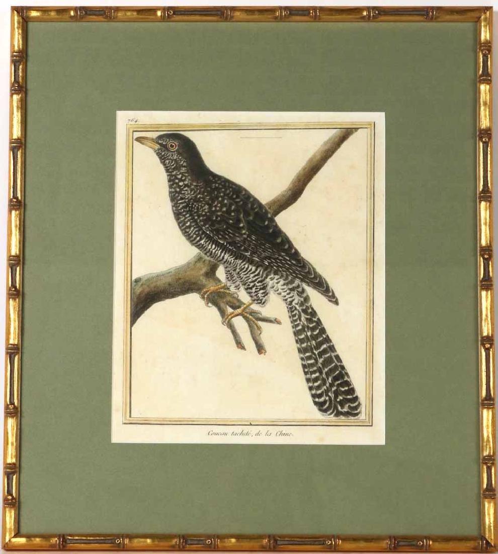 Six 18th C. Ornithological Prints - 8