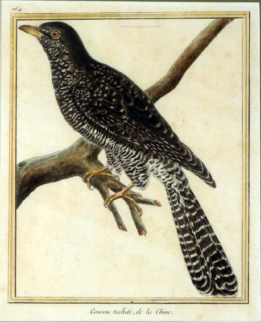 Six 18th C. Ornithological Prints - 9