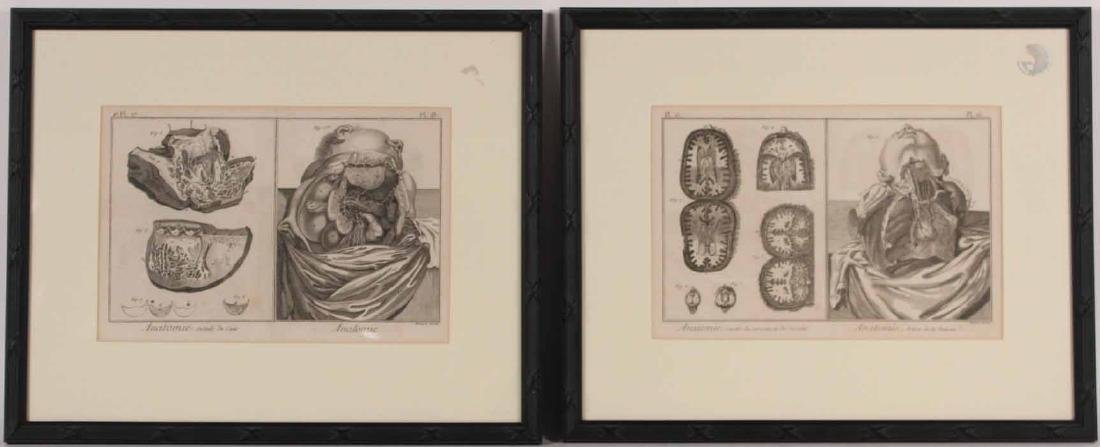 Two Engravings of Anatomy