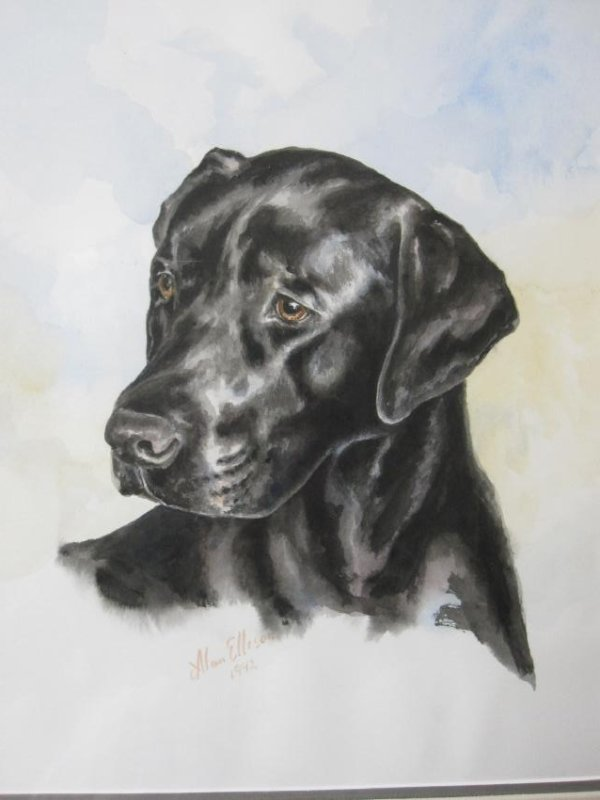 PORTRAIT OF ROSEMARY THE BLACK LAB