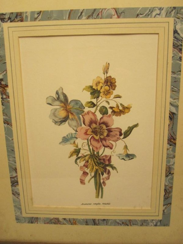 5 ASSORTED COLORED BOTANICAL PRINTS - 2
