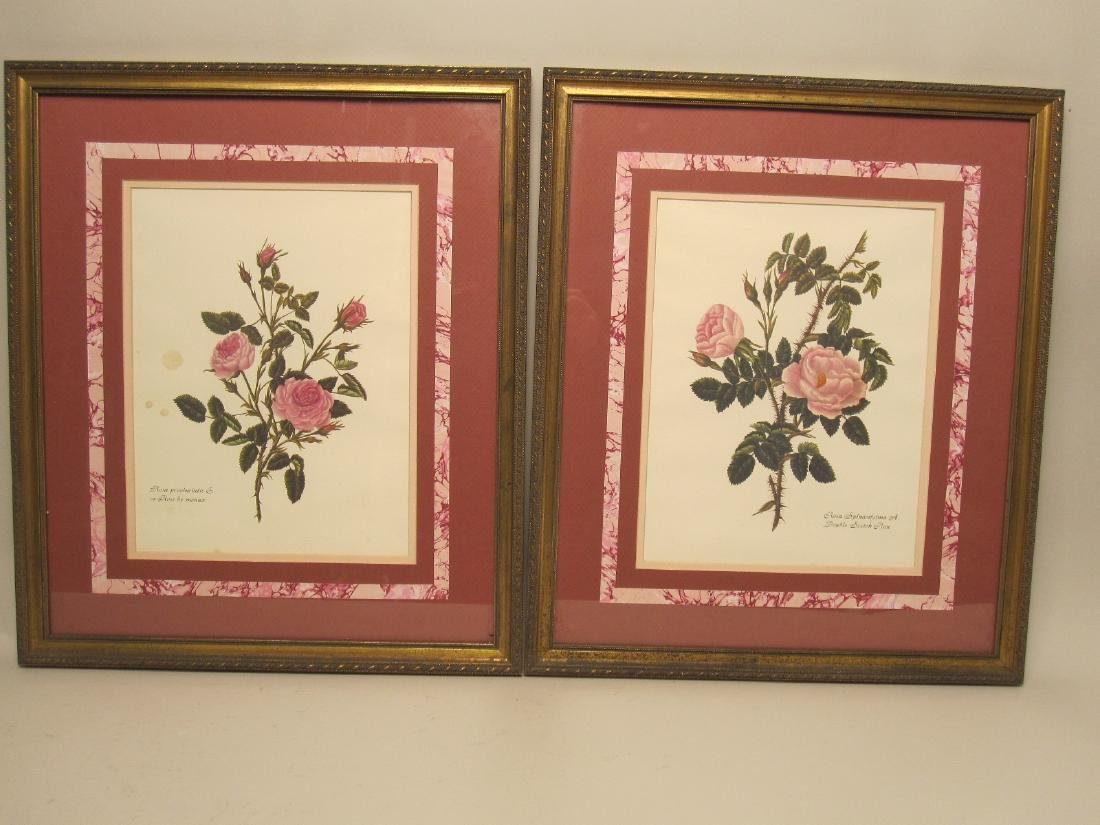 5 ASSORTED COLORED BOTANICAL PRINTS - 5