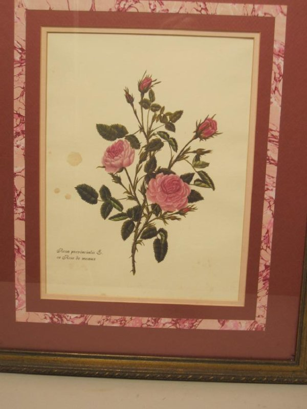 5 ASSORTED COLORED BOTANICAL PRINTS - 6