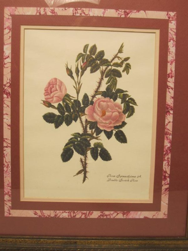 5 ASSORTED COLORED BOTANICAL PRINTS - 7
