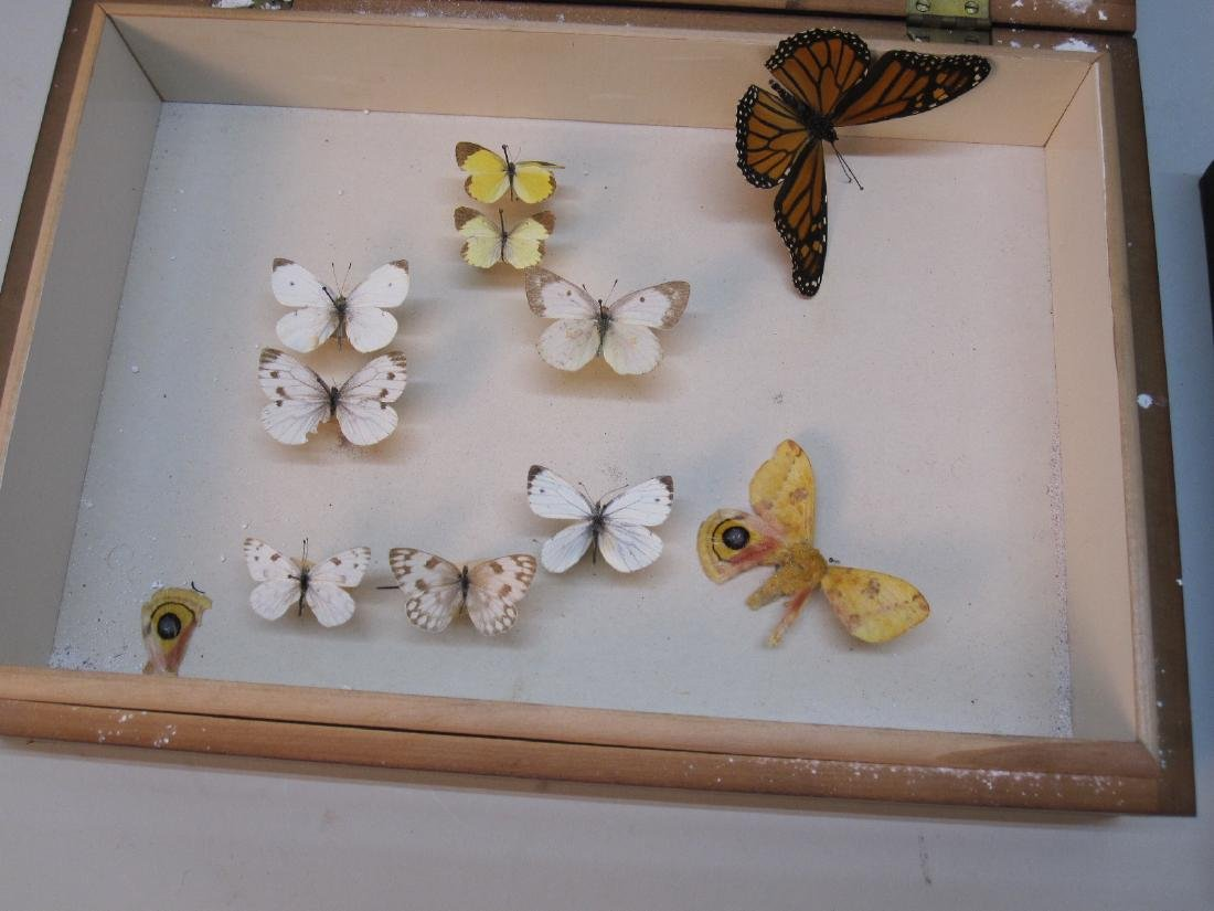 GROUP OF ASSORTED BUTTERFLY SPECIMENS - 2