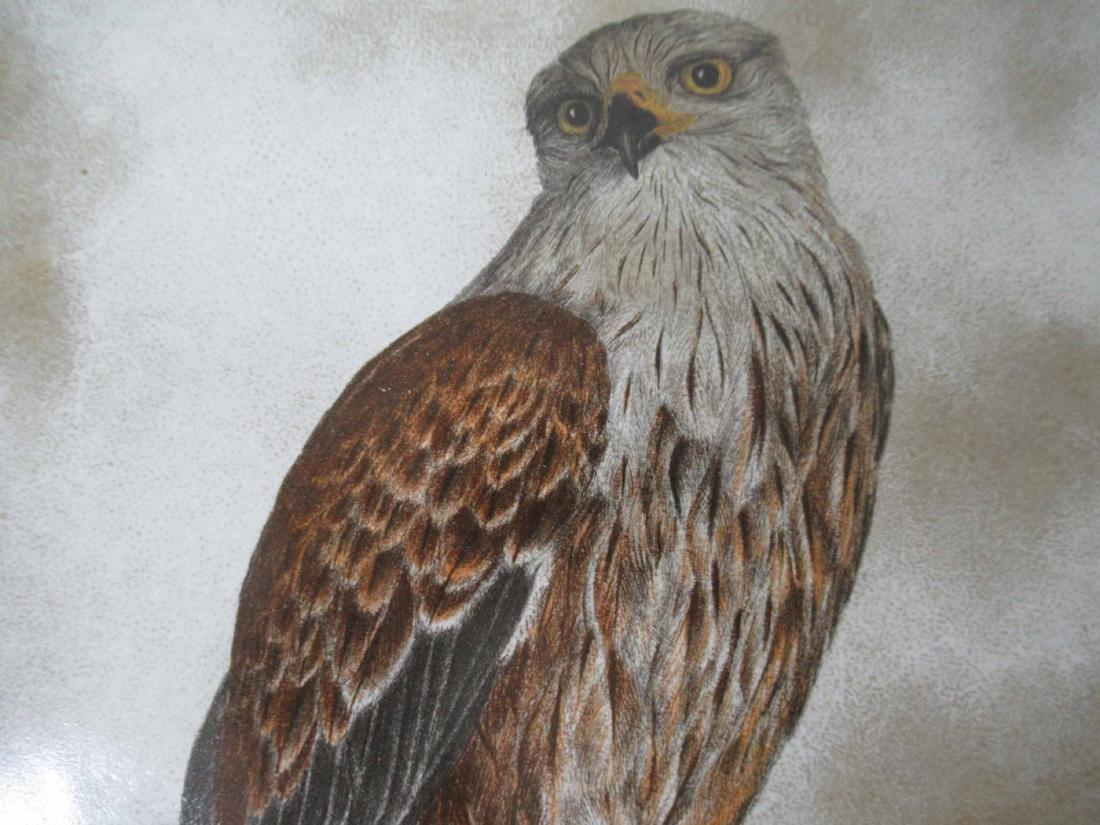 Four Glazed Raptor Bird Tiles - 2