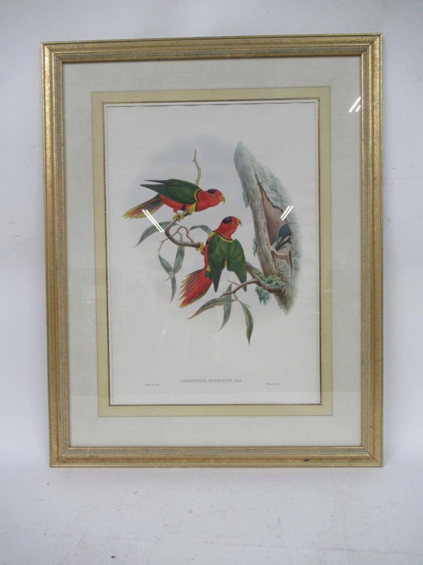 Handcolored Lithograph of Birds