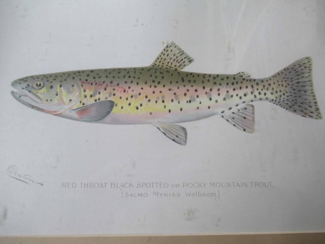 Denton Brown Trout Colored Print - 2