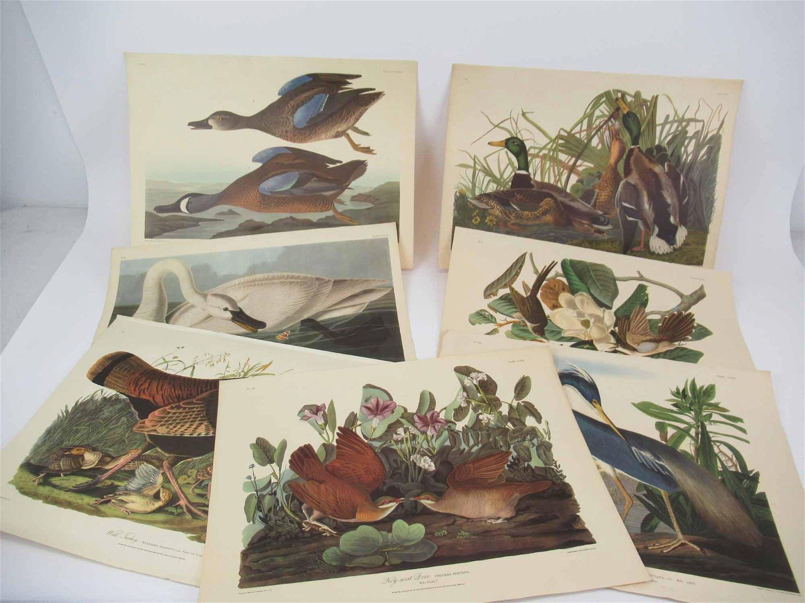 John J. Audubon Collection of Bird Prints