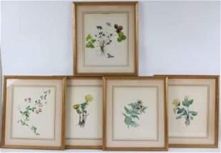 Five Botanical Prints