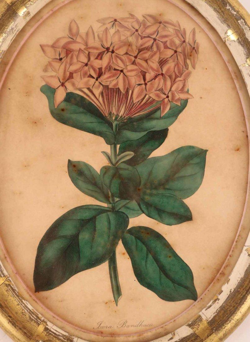 Three Botanical Prints - 4