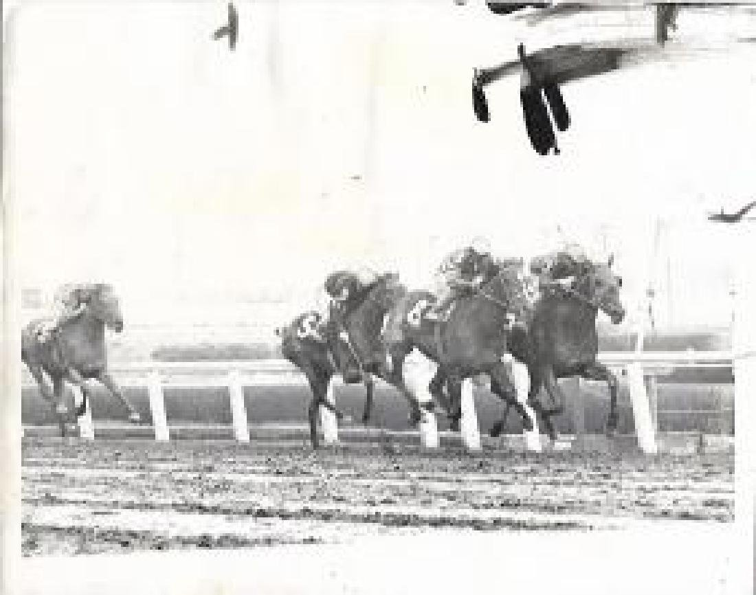 1964  Photo Sportsman's Park horse racing