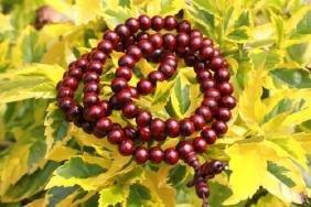Sandalwood 108 Beads Mala Bless Buddhism Buddhist Brace